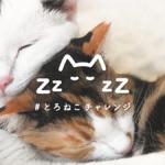 とろけるように眠る猫をSNSに投稿して保護猫団体を支援する「#とろねこチャレンジ」